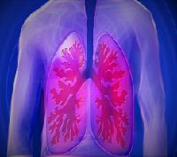 Class_11_Biology_Breathing_Exchange_of_Gases_Human_Respiratory_System