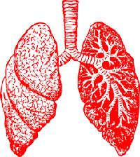 Class_11_Biology_Breathing_Exchange_of_Gases_Lungs