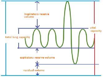 Class_11_Biology_Breathing_Exchange_of_Gases_Spirometer