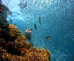Class_12_Biology_BioDiversity_And_Conservation_Coral_Reefs