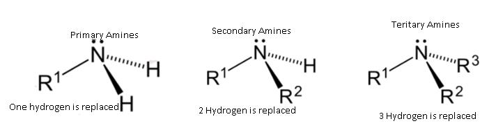 Class_12_Chemistry_Amines_Classification_Of_Amines1