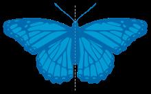 Class_7_Maths_Symmetry_Butterfly