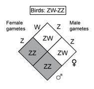 Class_12_Biology_Inheritance_And_Variation_Sex_Determination_In_Birds